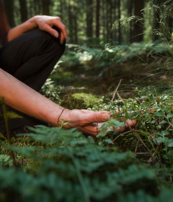holding leaves from the forest