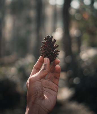 Holding a pinecone