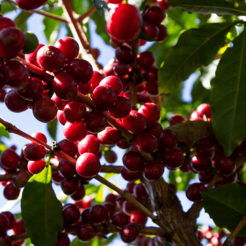 A Sustainable Coffee Experience